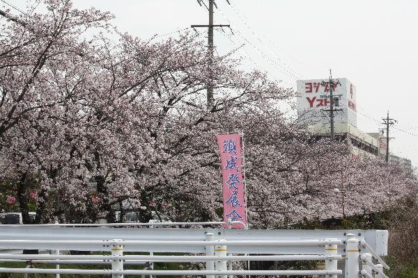 ふじまる18.JPG